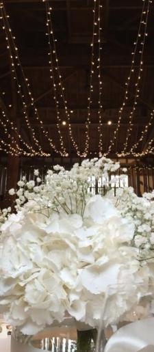 Ceiling- fairy light-canopy